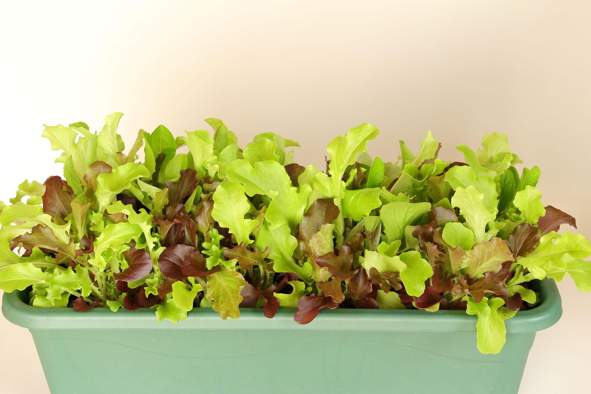 はじめての家庭菜園web講座